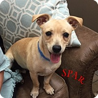 Adopt A Pet :: Buzz - Rockmart, GA