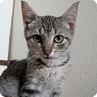 Adopt A Pet :: Evelyn - Grinnell, IA