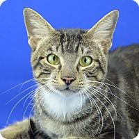 Adopt A Pet :: TEX - LAFAYETTE, LA