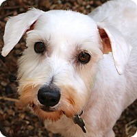Adopt A Pet :: Eva - Woonsocket, RI