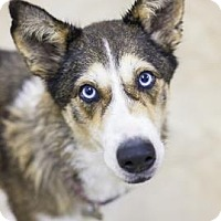 Adopt A Pet :: Ruza - Chicago, IL