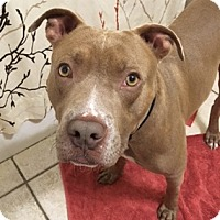 Adopt A Pet :: Rocky - Garland, TX
