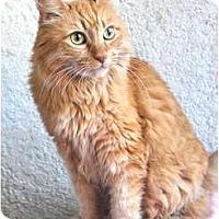 Adopt A Pet :: Cecily - Pasadena, CA