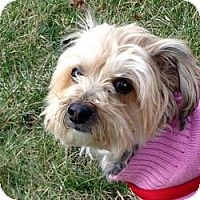 Adopt A Pet :: Lucy - Milwaukee, WI