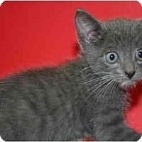 Adopt A Pet :: LIAM - SILVER SPRING, MD