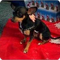Adopt A Pet :: Ozzy - Phoenix, AZ