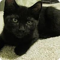 Adopt A Pet :: Lady Jane - Byron Center, MI
