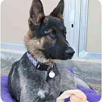 Adopt A Pet :: Freddie - Scottsdale, AZ