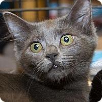 Adopt A Pet :: Lil Abby - Irvine, CA