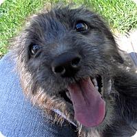 Adopt A Pet :: Baby Breezy - Oakley, CA