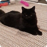 Adopt A Pet :: Katie - Douglas, ON