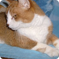Adopt A Pet :: Riley - North Middlesex, ON