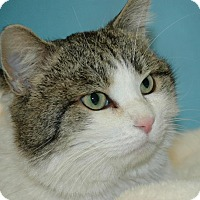 Adopt A Pet :: Frampton - Cincinnati, OH