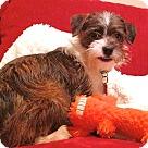 Adopt A Pet :: Jensen