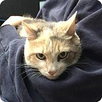 Adopt A Pet :: Patches - East Brunswick, NJ