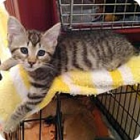 Adopt A Pet :: Pete - Medford, NJ