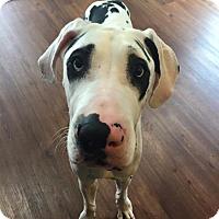 Adopt A Pet :: Zahara - Troy, MI