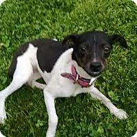 Adopt A Pet :: Angie - Columbus, OH
