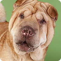 Adopt A Pet :: Peaches - Chicago, IL