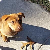 Adopt A Pet :: Jessie - Weeki Wachee, FL