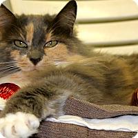 Adopt A Pet :: Daisy - Buffalo, WY