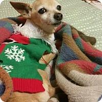 Adopt A Pet :: A373074 Angie - San Antonio, TX