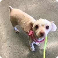 Adopt A Pet :: Maggie - N. Babylon, NY