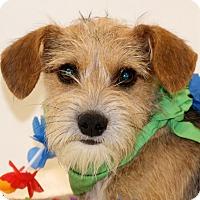 Adopt A Pet :: David Davidson - Glastonbury, CT