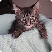 Adopt A Pet :: NIKOLAS - Newport Beach, CA