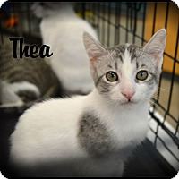Adopt A Pet :: Thea - Sherman Oaks, CA
