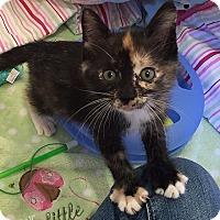Adopt A Pet :: Zuri - Tampa, FL