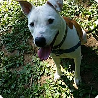 Adopt A Pet :: Apollo - Columbia, MD