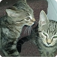 Adopt A Pet :: Fritz and Fredrick - Mt Pleasant, PA