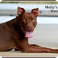 Adopt A Pet :: Maximus - Dixon, KY