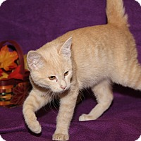 Adopt A Pet :: Milo (Neutered) - Marietta, OH