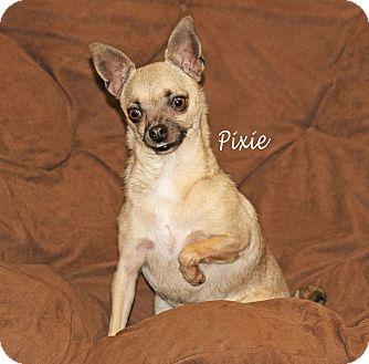 Chihuahua Mix Dog for adoption in Idaho Falls, Idaho - Pixie