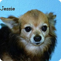 Adopt A Pet :: Jessie -approved application - DuQuoin, IL
