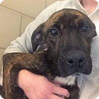 Adopt A Pet :: CALI - Wintersville, OH