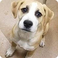 Adopt A Pet :: Dani #162503 - Apple Valley, CA