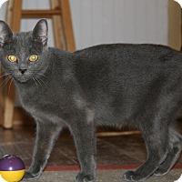 Adopt A Pet :: Ophelia - Carlisle, PA