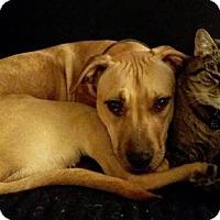 Adopt A Pet :: Pippa - Mayer, MN