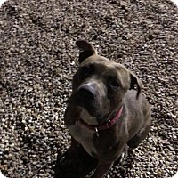 Adopt A Pet :: Princess - Middlebury, CT