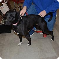Adopt A Pet :: Maru - Hopkinsville, KY