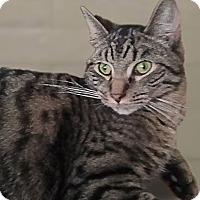 Adopt A Pet :: Ringo - Evans, WV