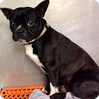 Adopt A Pet :: PENDING ADOPTION Bosco - Oswego, IL