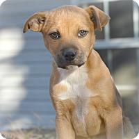 Adopt A Pet :: Fletcher~adopted! - Glastonbury, CT