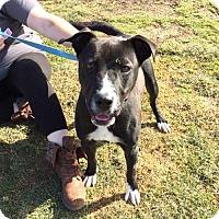 Adopt A Pet :: Emilia - Akron, OH