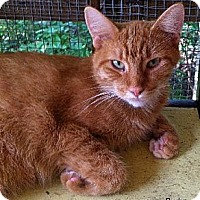 Adopt A Pet :: Rudy - Cullman, AL