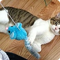 Adopt A Pet :: Ziggy - Reston, VA