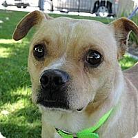 Adopt A Pet :: Earvin - Poway, CA